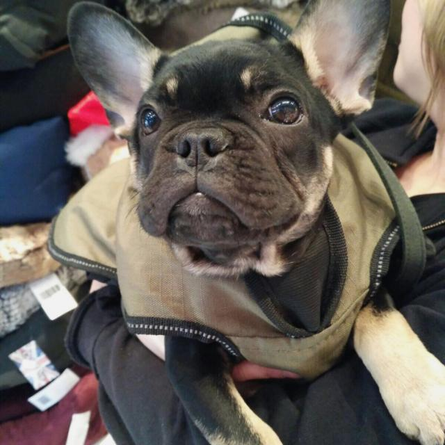 Sales Assistant For Luxury Pet Stores